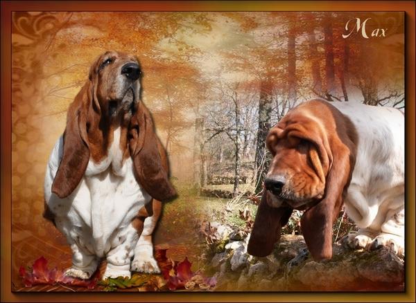créer un forum : basset hound aventures - Portail Hommag20