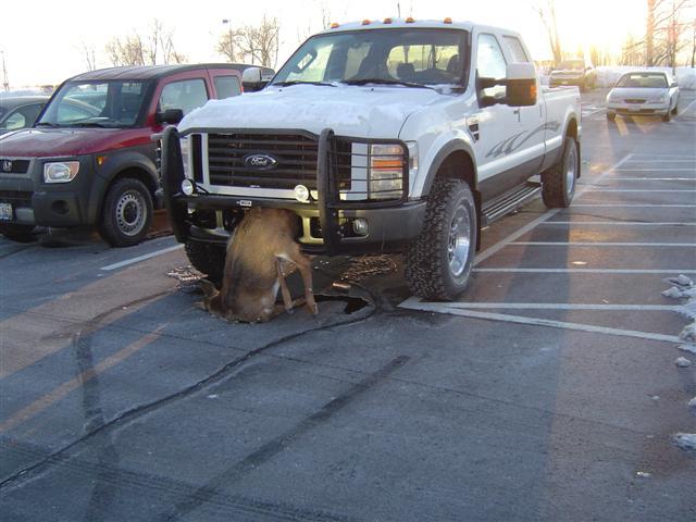 La verité Chevrolet vs Dodge Deer-f10
