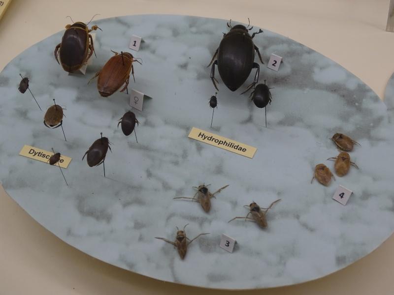 Musée zoologique de Strasbourg Dsc05913