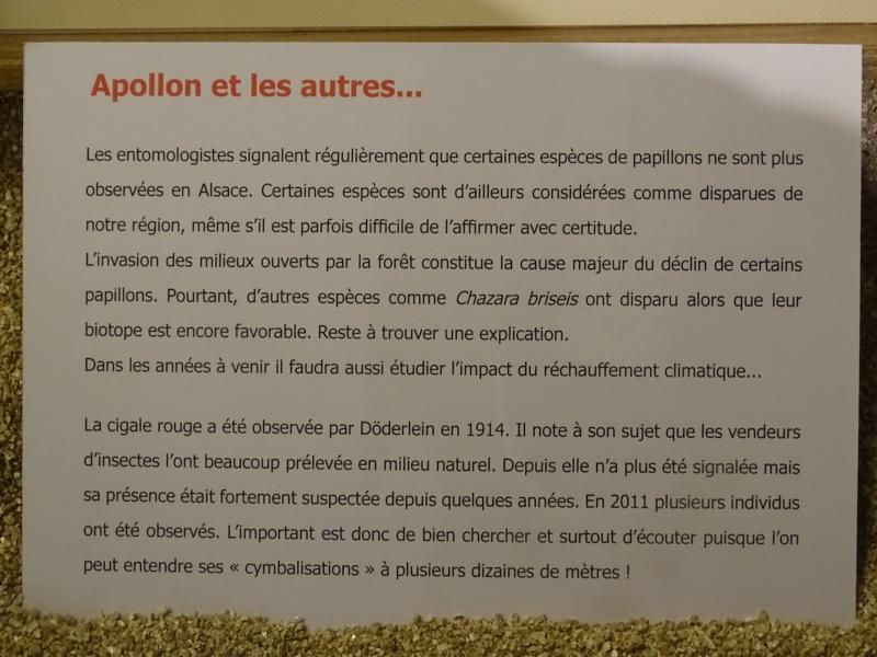 Musée zoologique de Strasbourg Dsc05919