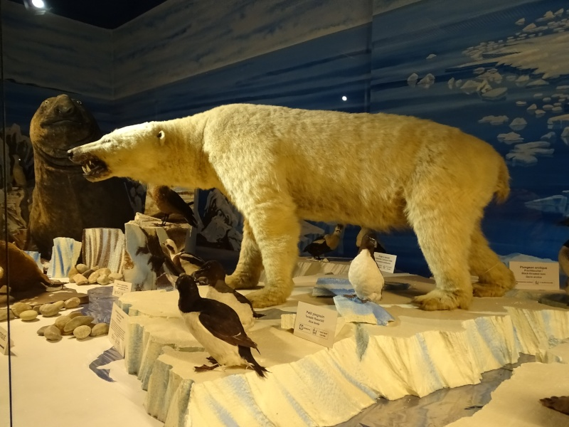 Musée zoologique de Strasbourg Dsc05921