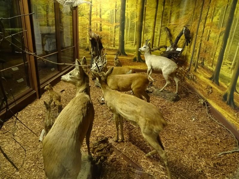 Musée zoologique de Strasbourg Dsc06012