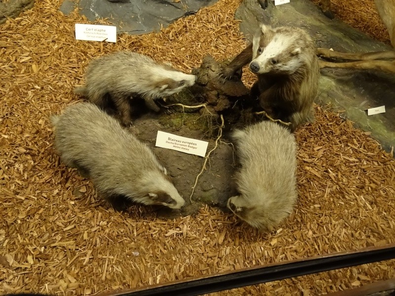 Musée zoologique de Strasbourg Dsc06013