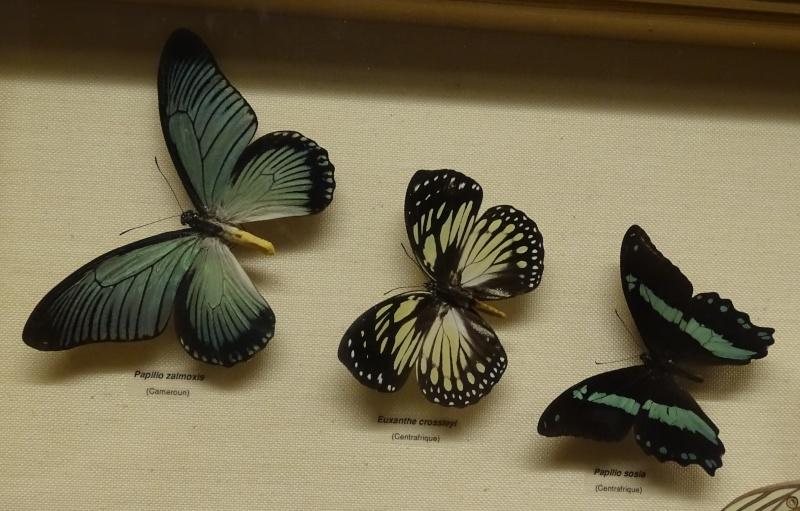 Musée zoologique de Strasbourg Dsc06215