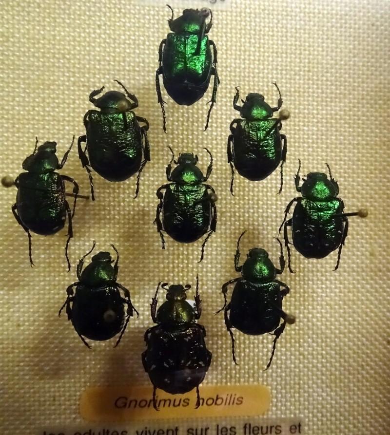 Musée zoologique de Strasbourg Dsc06312