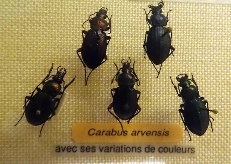 Musée zoologique de Strasbourg Dsc06317
