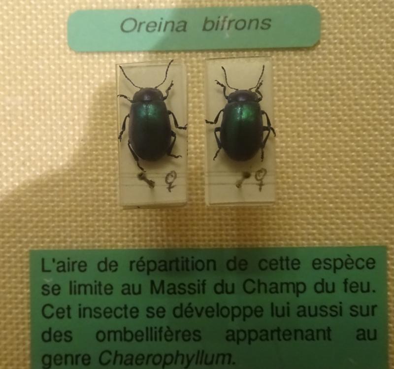 Musée zoologique de Strasbourg Dsc06318
