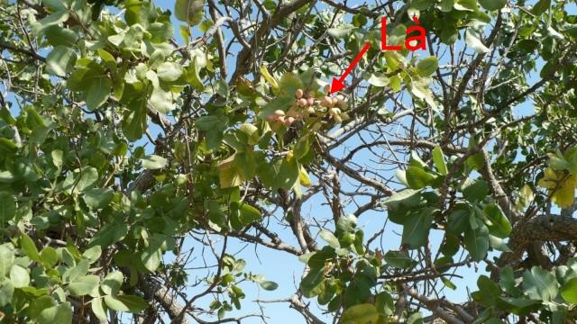 plantes de Sicile P1000910