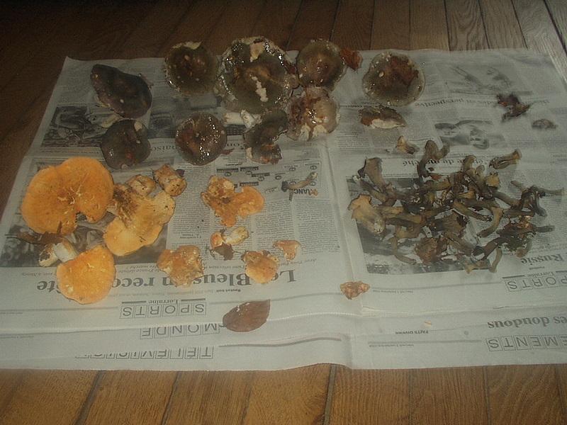 Rubrique mycologique - Page 4 P1010012