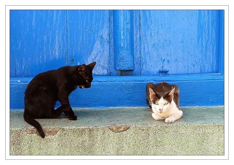 Mes chiens et chats du monde. Dsc_0110
