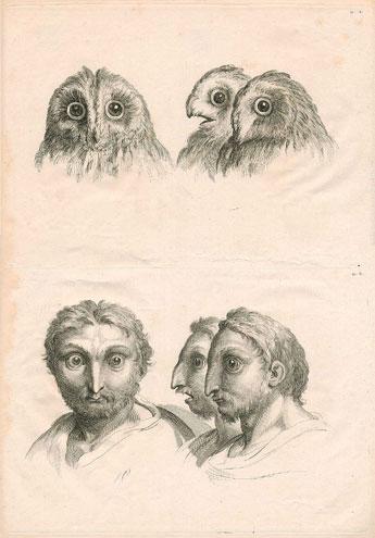 Oiseaux de nuit - Page 3 Chat_h10