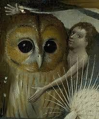 Oiseaux de nuit Chouet10
