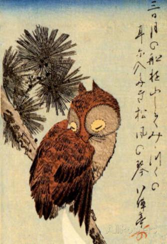 Oiseaux de nuit Chouet11