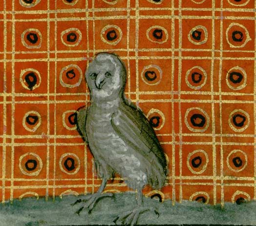 Oiseaux de nuit - Page 3 Chouet13