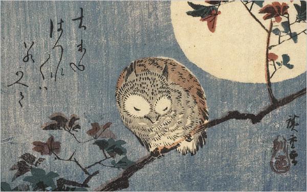 Oiseaux de nuit Hirosh10
