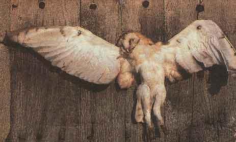 Oiseaux de nuit Suppli10