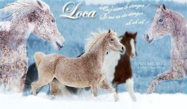 Loca - ♀ - Royaume de la Terre 65962610
