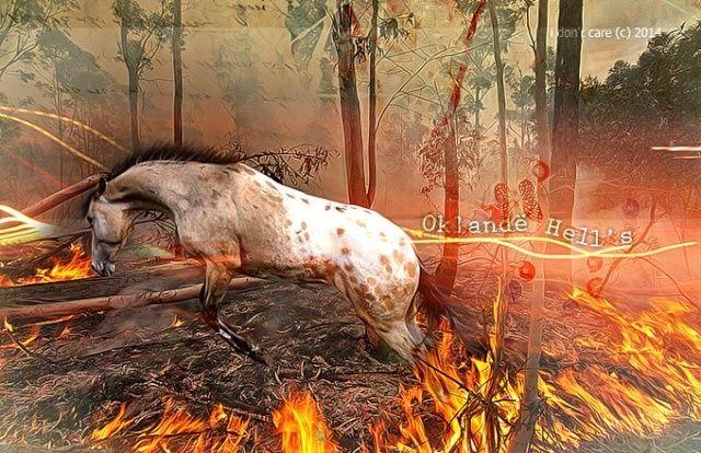 Oklande Hell's - ♂ - Royaume du feu   Untrut10