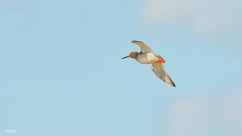 mon abc des oiseaux - Page 2 100_ch11