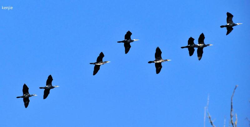 mon abc des oiseaux - Page 2 126_vo10