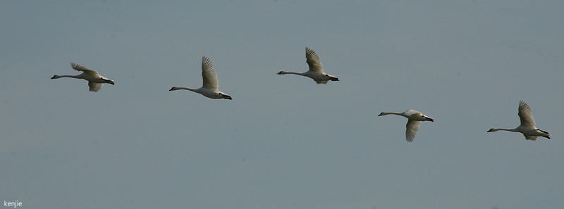 mon abc des oiseaux - Page 3 225_vo10
