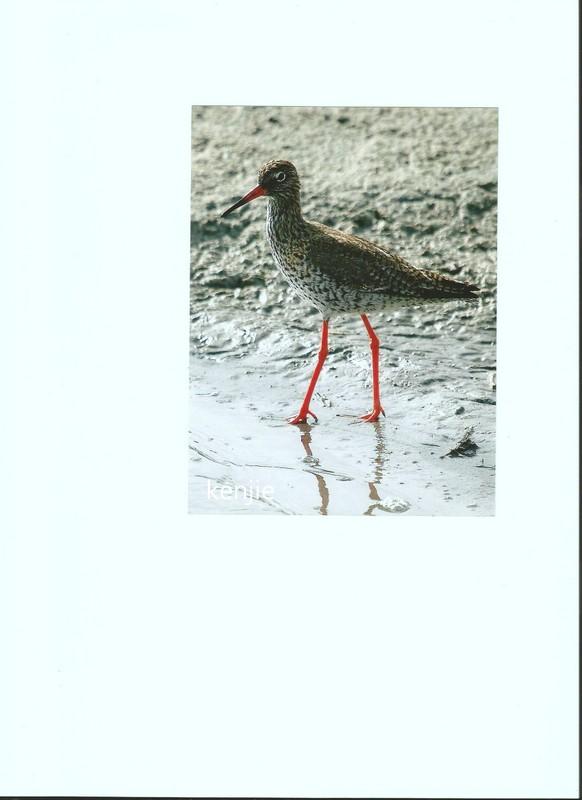 mon abc des oiseaux - Page 2 Scan0011