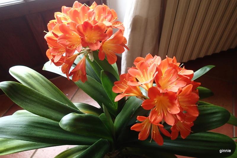 Floraisons d'intérieur  - Page 5 P3141410
