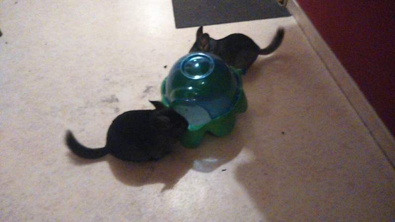 Biscotte et Choupette ! Adoptees  10888710