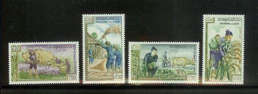 Landwirtschaft Laos10