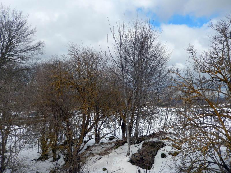 Une envie de printemps !!! 2015-214