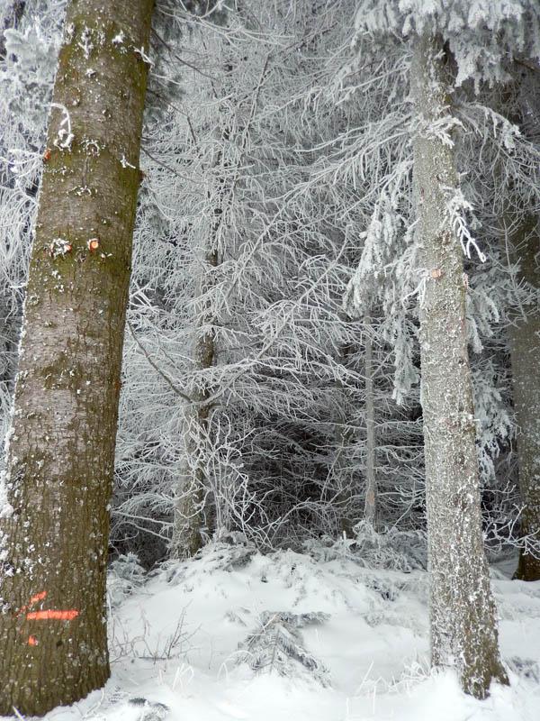 Un véritable hiver !!! Dscn8310
