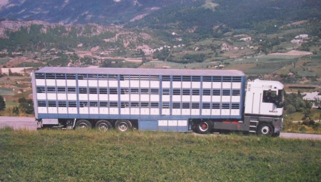 Des photos de camions bétaillères à moutons et d'autres photos de camions aussi conduit par Henry Elie . - Page 3 00413