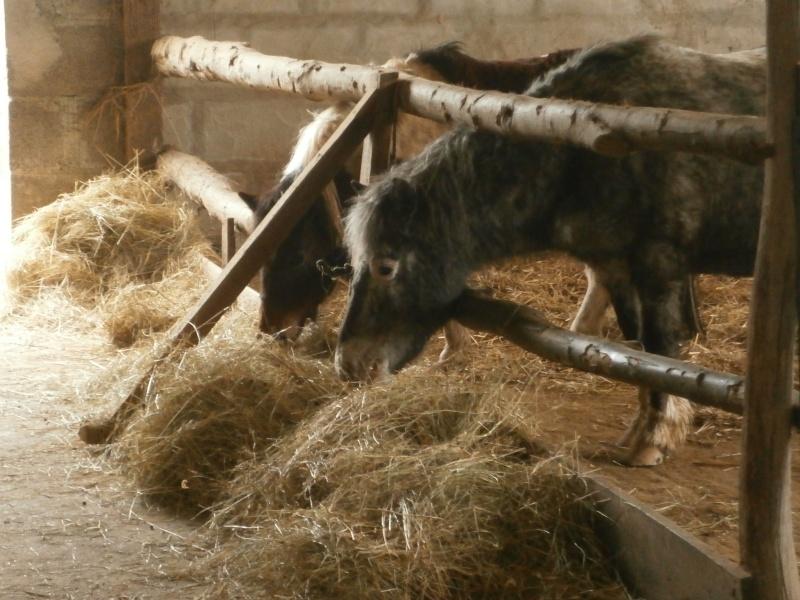 CANNELLE - ONC poney née en 2009 - adoptée en décembre 2013 par Catie - Page 2 P1070113