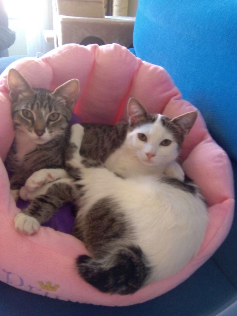 Xaine y Aine adoptadas juntas en Vitoria Aine10