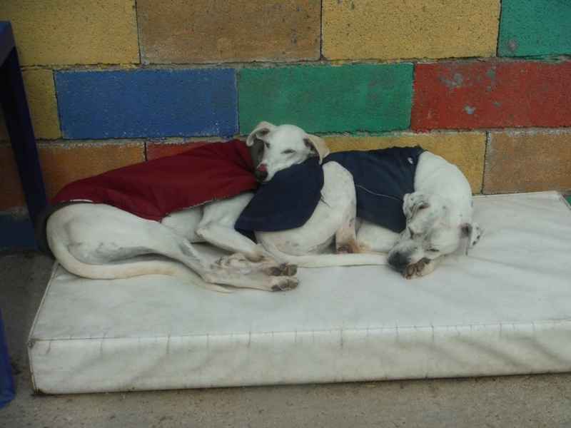Galgo party chez Domy. 26/02/2015 11034210