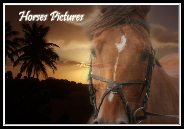 Horses Pictures