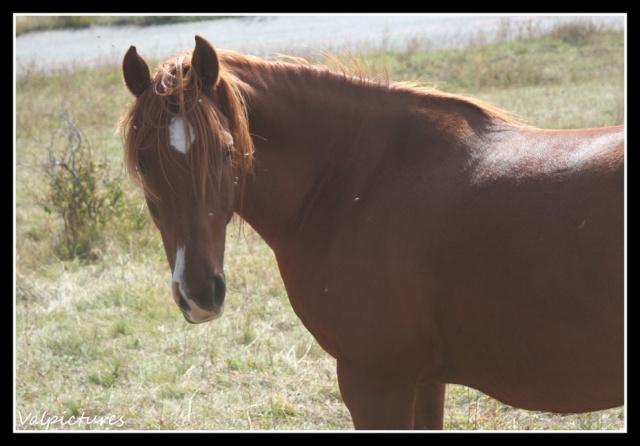 Mes photos de chevaux... - Page 3 Fow1010