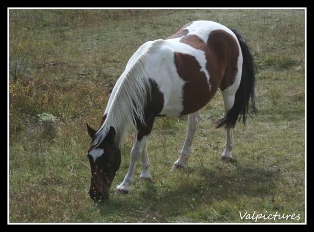 Mes photos de chevaux... - Page 3 Fow1210