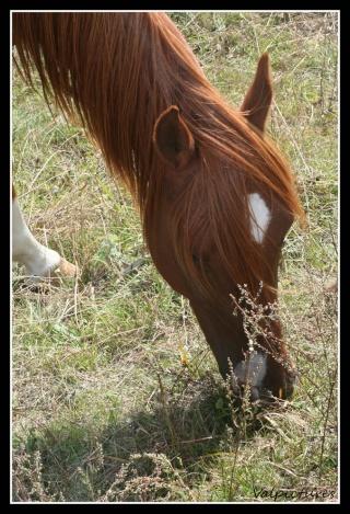 Mes photos de chevaux... - Page 3 Fow811