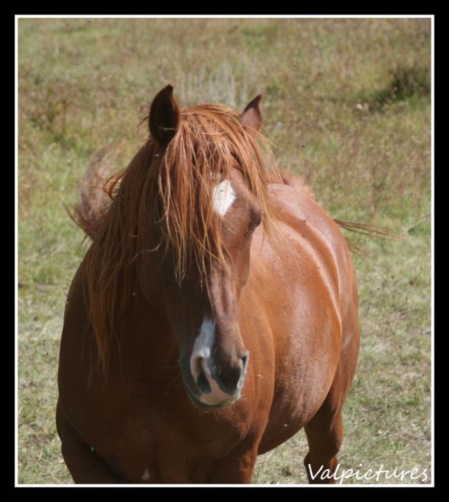 Mes photos de chevaux... - Page 3 Fow910