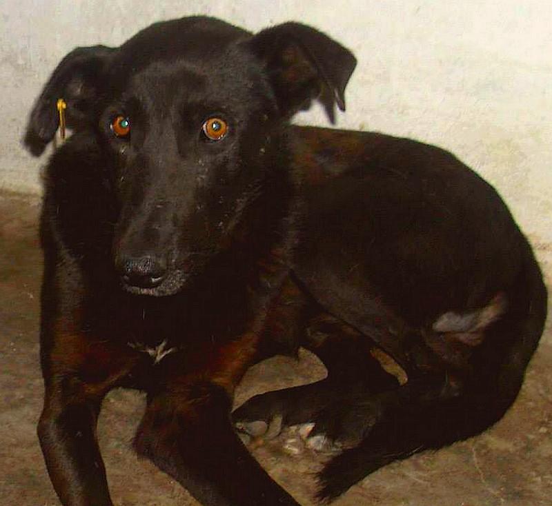 CASPER - Mâle croisé de taille moyenne, né environ octobre 2009 (PASCANI) - adopté par Marie-Blanche (57) Casper10