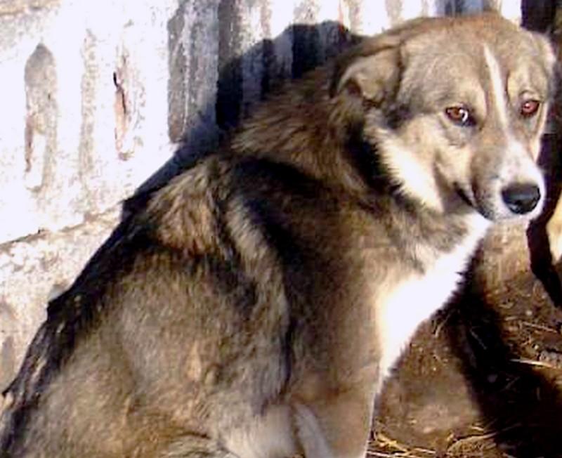 LOUISIANE - mâle croisé, taille moyenne (PASCANI) Louisi10