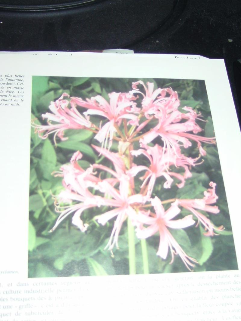 arbustre a fleurs Bild6662