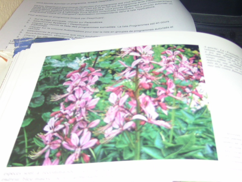 arbustre a fleurs Bild6663