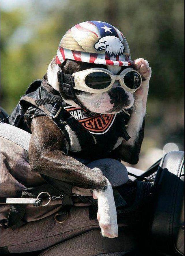 Humour en image du Forum Passion-Harley  ... - Page 5 Captu356