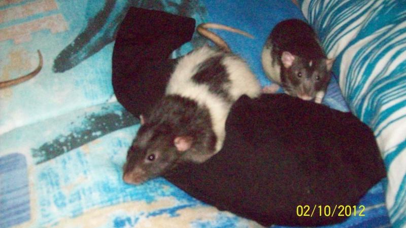 Cookie et Rubis, les p'tits morpions  - Page 3 100_3511