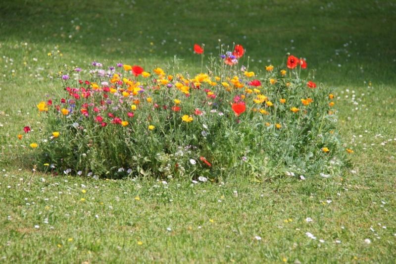 Fleurs de Wangen 2013 Img_9845