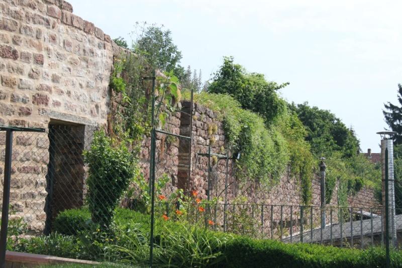 Chantier d'insertion pour la restauration du mur d'enceinte de Wangen - Page 2 Img_9875