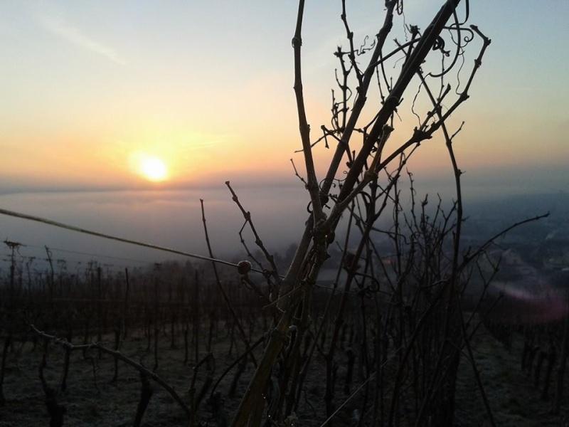 Vins et Crémant d'Alsace Thierry- Martin - Page 4 Photo_10