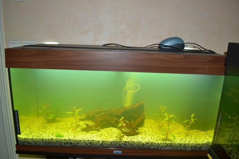 Aquarium 180 Litres Dsc_0023